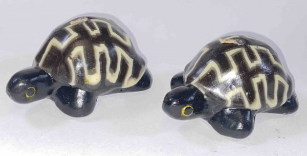Turtle Gecko