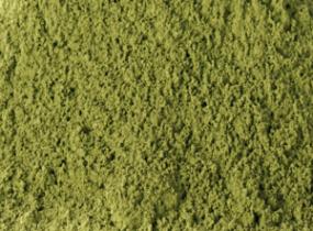 Matcha BIO-Tee