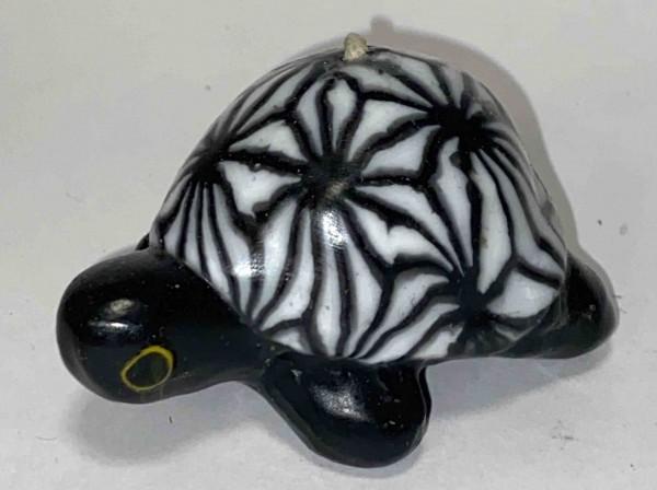 Turtle Spider