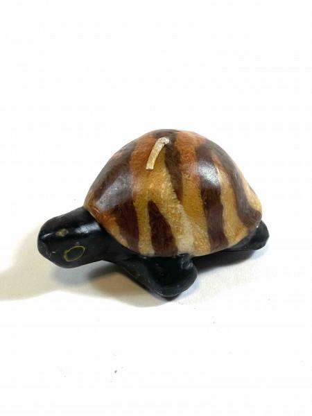 Turtle Brown